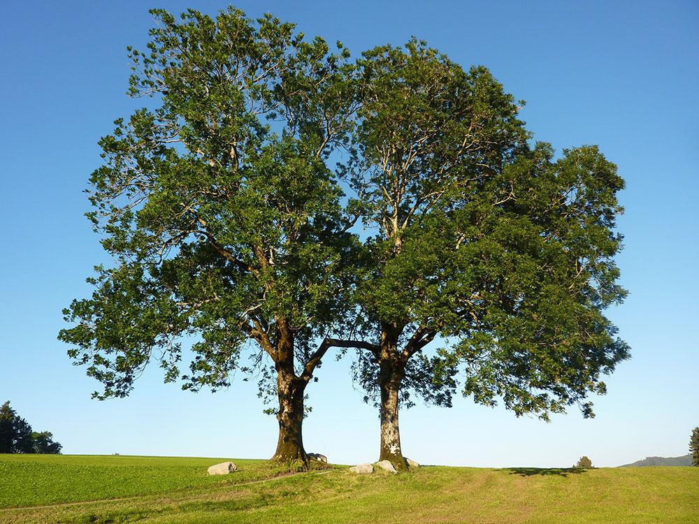 L'arboriculture